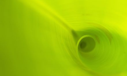 Day 72 Phytolife Liquid Chlorophyll